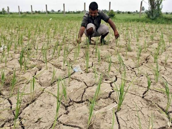 Agricultural measures to get High yielding at low cost