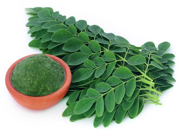 health benefits of drumstick leaves