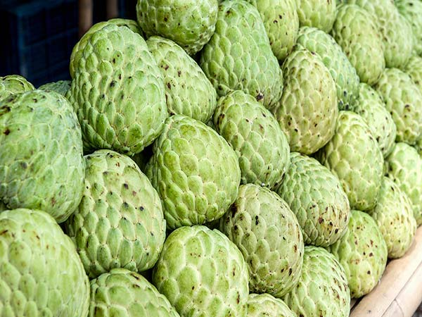 Do you know the benefits of eating custard apple..?