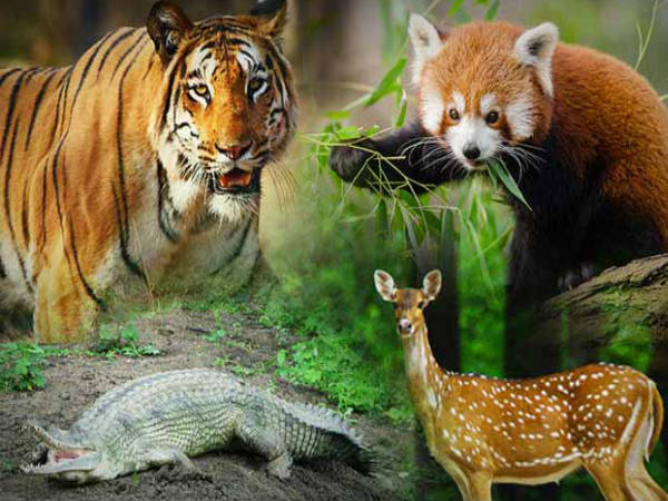 list of places with wildlife sanctuaries reserves and parks in kannada