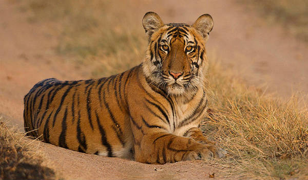 The major tiger conservation zones of India complete list in kannada